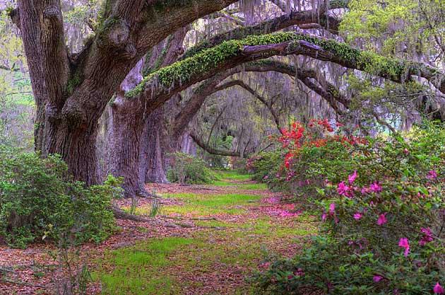 Beautiful Old Alabama Trees