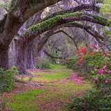 Beautiful Old Alabama Trees